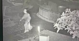 影/台大醉月湖公鵝慘遭獵殺帶走 凶手犯案畫面曝光