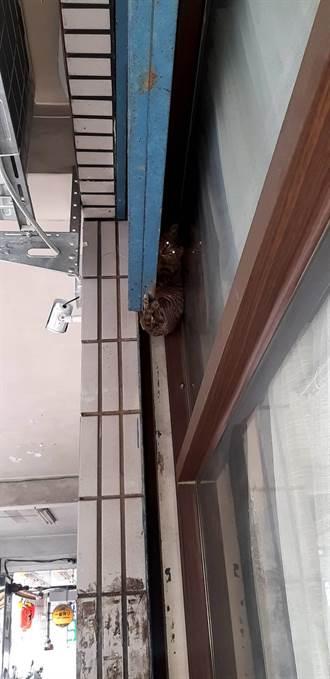 小貓被捲入3公尺高鐵捲門 新北動保處即刻救援