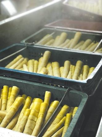 泰安桂竹筍歉收 公所仍辦美食宴促銷