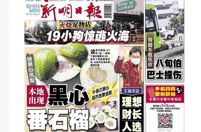 新加坡新明日報報導當地出現台灣黑心芭樂。(圖/翻攝新明日報臉書)