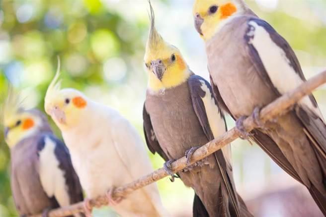 內湖一間彩券行門口的鸚鵡咬傷客人,老闆娘因疏於注意遭檢察官依過失傷害提起公訴。(示意圖/達志影像)