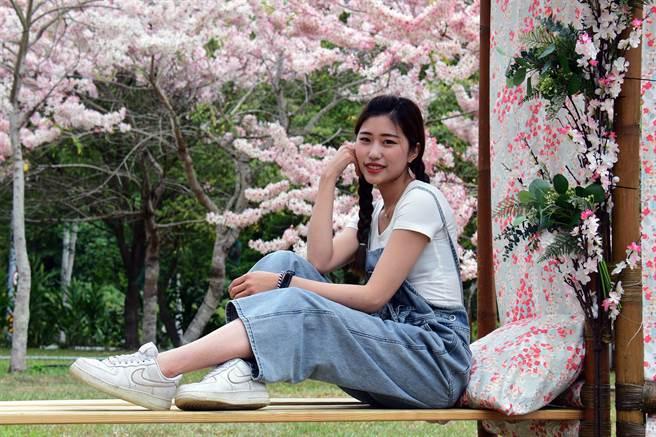 有平地櫻花之稱的花旗木已開好開滿,人人都是網紅網美。(莊哲權攝)