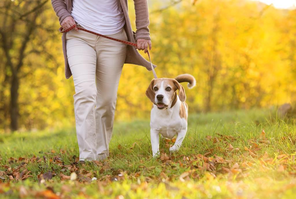 狗狗散步完不想回家,竟倒地裝死怎麼哄都不起來,讓主人又氣又好笑。(示意圖/達志影像)