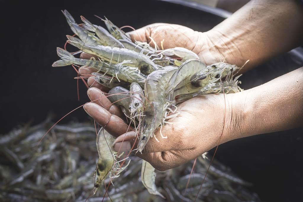 一名女網友發文表示,她買蝦仁回家準備料理時,卻出現一灘詭異藍水,讓她憂心是否買到品質不佳的蝦仁。(達志影像/示意圖)