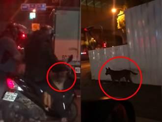 台中騎士半夜推狗下車加速駛離 小黑街上狂奔心碎影片曝