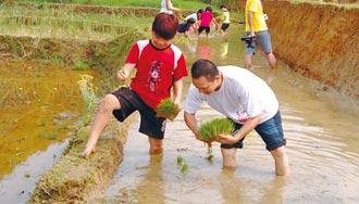 新故鄉動員令》食農教育 從小扎根 三芝學童跟著農民整土、栽種、採收…