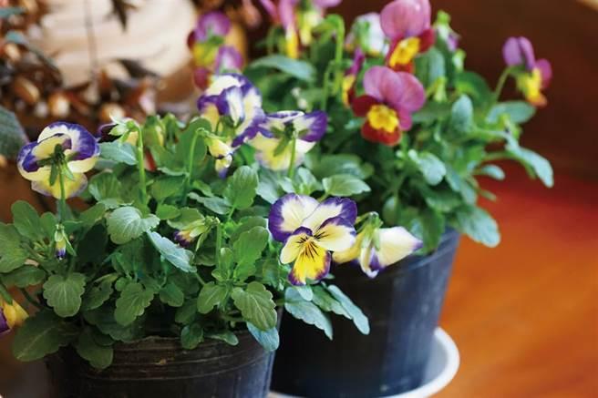 巫佩璇引導人們仔細觀察植物,在一花一葉的伸展中,感受生命的綻放與偉大。(圖/林格立提供)
