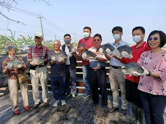 疫情外銷受阻 ASC認證台灣鯛養殖戶:應打通國內連鎖賣場通路