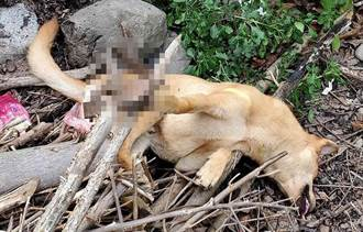 建山國小旁流浪犬遭捕獸夾斷掌 台灣動物緊急救援小組獲報趕到救援