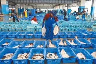 漁民憂衝擊魚價 要政府硬起來