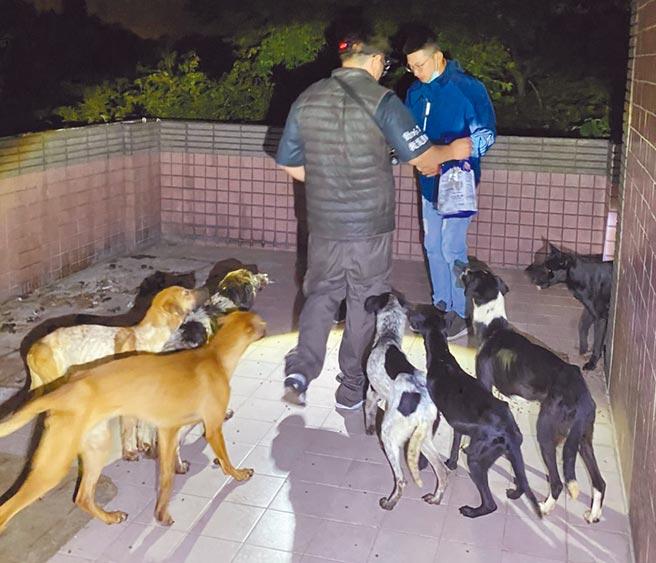 新竹市發生「狗吃狗」事件,一處廢墟房屋裡有7隻狗,無人餵食和看管,骨瘦如柴。(邵柏虎提供/羅浚濱新竹傳真)