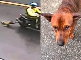 心痛 小狗遭拖行滿地血痕 民眾攔下痛斥飼主:應該你被拖