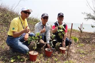 守護七股潟湖  台江國家公園要在網仔寮沙洲植樹7萬株