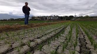56年來最大乾旱 陳吉仲:農損逾5億恐再擴大