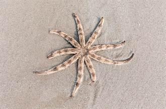 沙灘散步驚見八腳海怪 詭異長相母女驚呼:從沒看過
