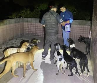 新竹市狗吃狗事件 婦人移送地檢署偵辦