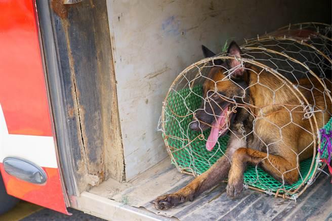 峇里島居民在水溝裡發現一隻小狗,嘴與後腿都被膠帶捆住,動保組織推測牠先前差點被賣到狗肉市場變大餐。(示意圖/達志影像)