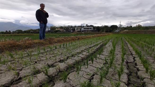縱谷部分地區農田乾到龜裂 農民棄耕「不做了」