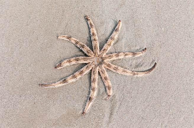 澳洲母女日前到沙灘散步,意外發現一隻長有八隻觸手的詭異生物。(示意圖/達志影像)