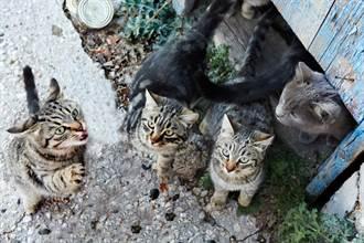 垃圾堆養19貓沒結紮遭罰28萬 女怒告縣府結局出爐