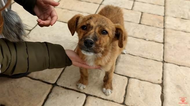 小狗狗露出傷心的表情,彷彿在說「拜託帶我回家」,讓1100萬網友心都碎了。(圖/PawMeow)