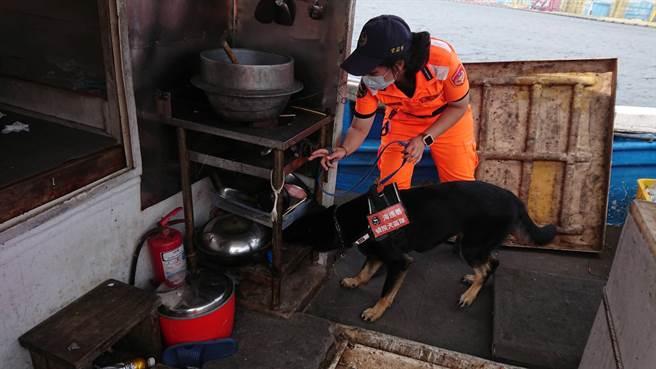 海巡運用偵巡犬上船,詳查是否夾帶違禁物品。(海巡署提供)