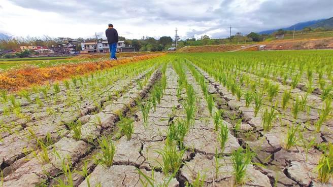经济部长王美花坦言,4月份降雨仍不理想,水情比较严峻。(资料照/蔡旻妤摄)