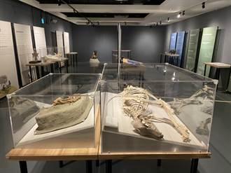 南科考古館史前動物出遊 新營文化中心展出