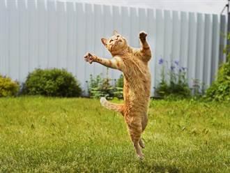 2特務貓回家不走正門 靠一物「極限攀登」帥慘