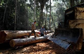 巴西總統致函拜登  願終結林木盜伐以換取金援