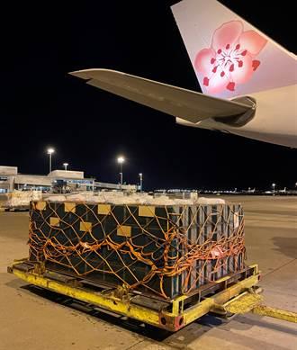 華航首度承運最迷你嬌客 空運蜜蜂南半球飛北半球