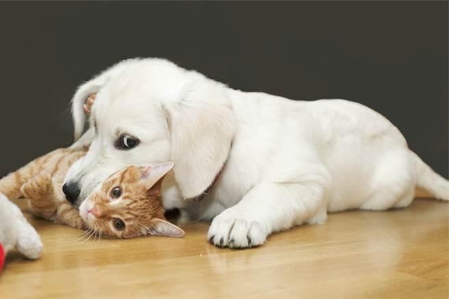 主人開車載一狗一貓出門,發現寵物在後座異常安靜,轉頭一看發現,愛犬竟咬著貓頭不放,原來是牠們玩到斷電,定格在上一秒的動作。(示意圖/達志影像)