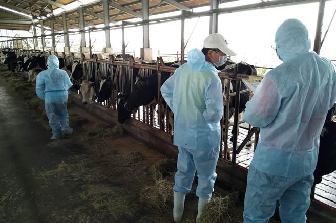 屏縣府進行轄內養牛場牛隻健康情形訪查。(屏縣府提供)