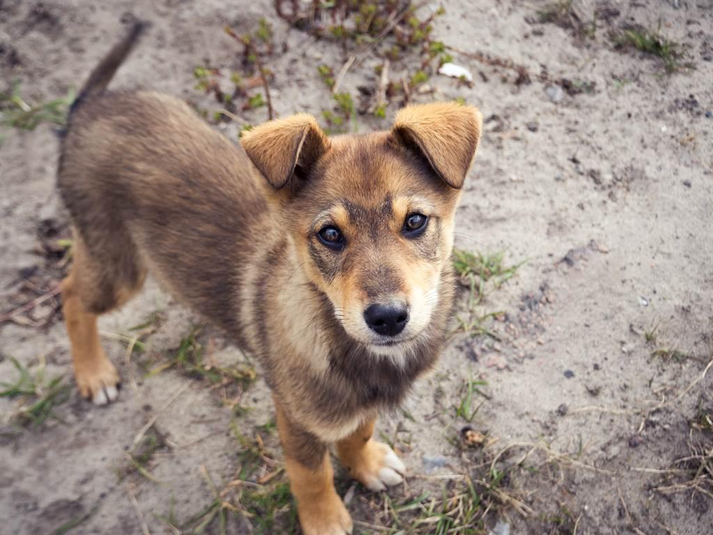 夫妻倆至北馬其頓度假遇到一隻跛腳流浪幼犬,沒想到在他們的鼓勵下,幼犬竟聽話的跟著夫妻倆回家,讓他們相信這就是緣分。(示意圖/達志影像)