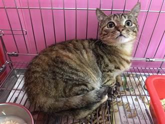 小貓誤闖工廠遭燙傷 動保處急救援恢復粉嫩肉墊