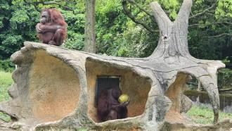 六福村動物派對 保育員親自與遊客互動