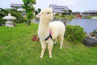 萌系動物是旅伴 全台最大日式庭園生態度假飯店添亮點