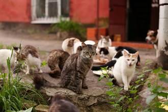 查看鄰居售屋廣告 主人驚見愛貓多重身分傻眼:不想認牠