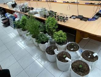 男子在林口租屋處種大麻 楠梓警方北上破獲
