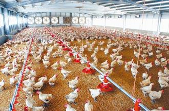 進口雞年增4萬噸 土雞不敵洋雞