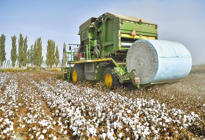 外媒披露,中國正準備建立中國版的「良好棉花發展協會」。圖為新疆棉田正在進行機械化採摘。(中新社)