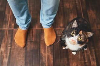 虎斑貓現身員工餐廳乖巧排隊 網驚喜:比人懂禮貌