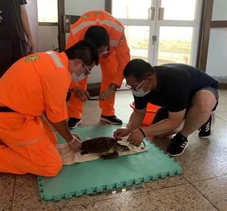 受傷玳瑁海龜現蹤東石塭港 海巡協助救援後送醫