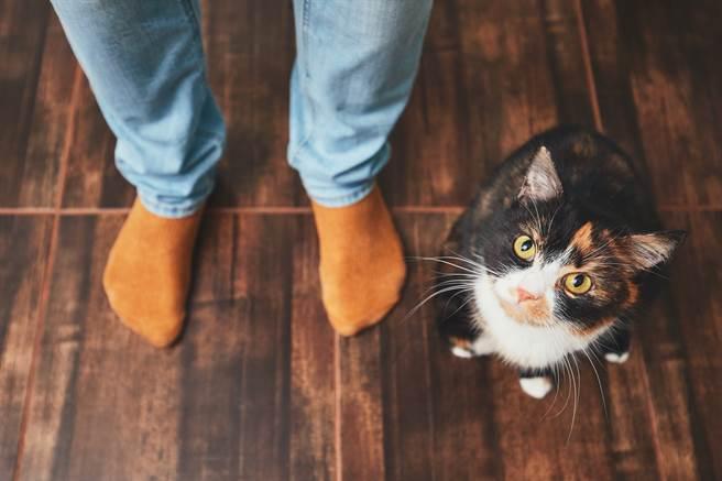 大陸內蒙古一間公司的員工餐廳飼養貓咪,每到用餐時間牠都會和人們一起排隊打飯。(示意圖/達志影像)