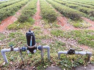 水稻強化栽培系統 省5成水量