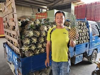 雲林鳳梨採果熟及冷鏈技術 外銷日本好評多
