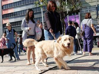 嘉義市動物保護自治條例草案 毛小孩外出用鍊繩、箱籠