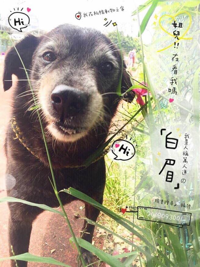 邱梅格幫板橋動物之家的毛寶貝製作認養卡。(新北市動保處提供)