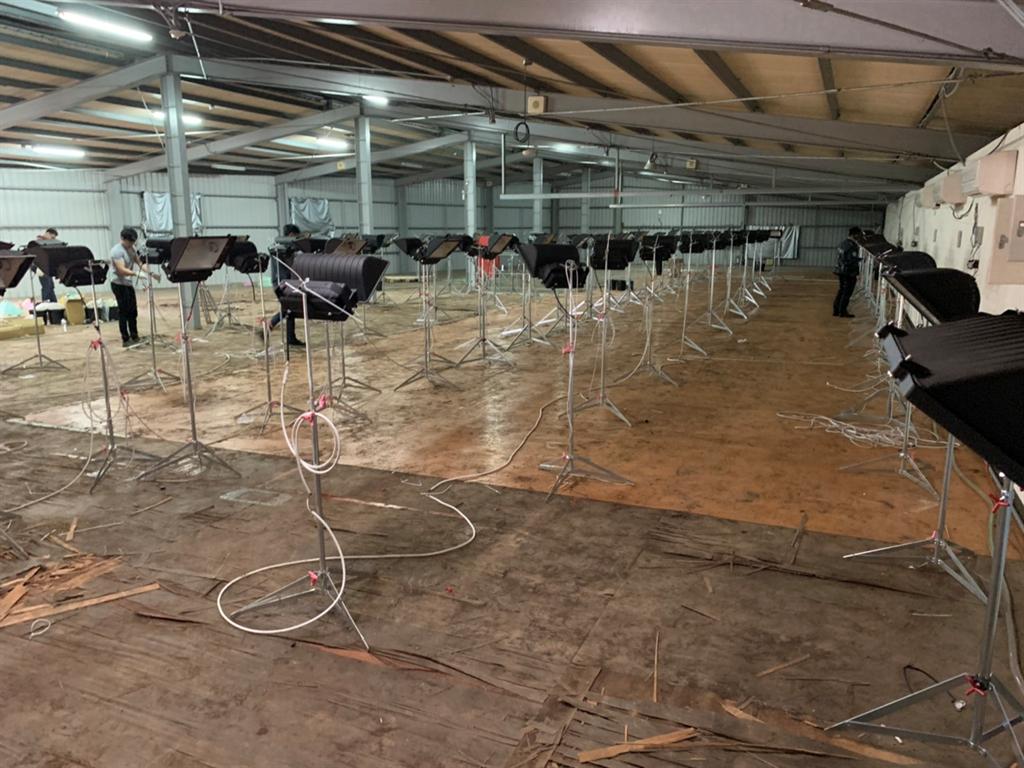 調查局上月在新竹縣關西鎮山區破獲一處大麻農場,查獲1608株大麻植株(調查局提供)