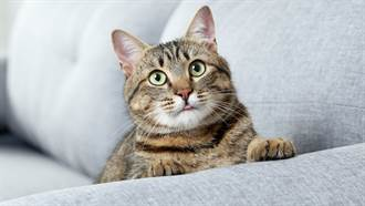 愛貓離世滿1年 監視器現「黑貓清楚輪廓」網嚇歪